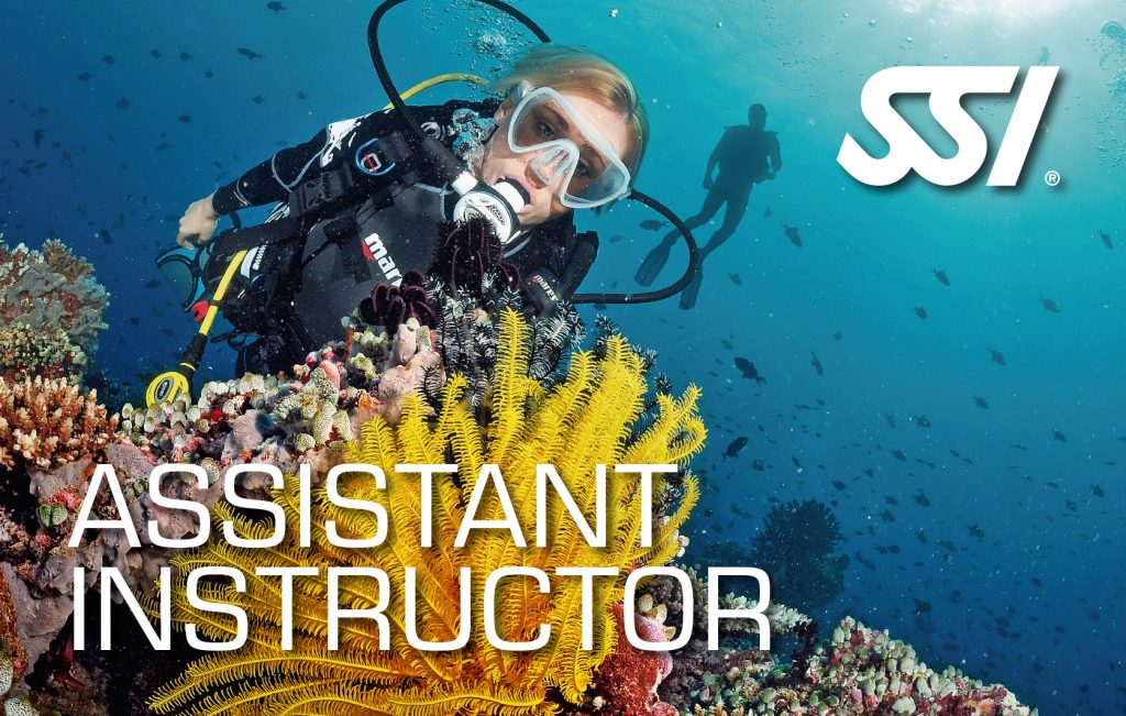 assistant instructor
